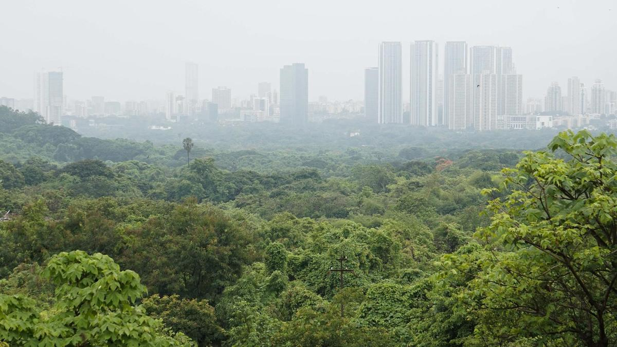 The forest dwellers fighting to save Mumbai's green lung from urbanisation